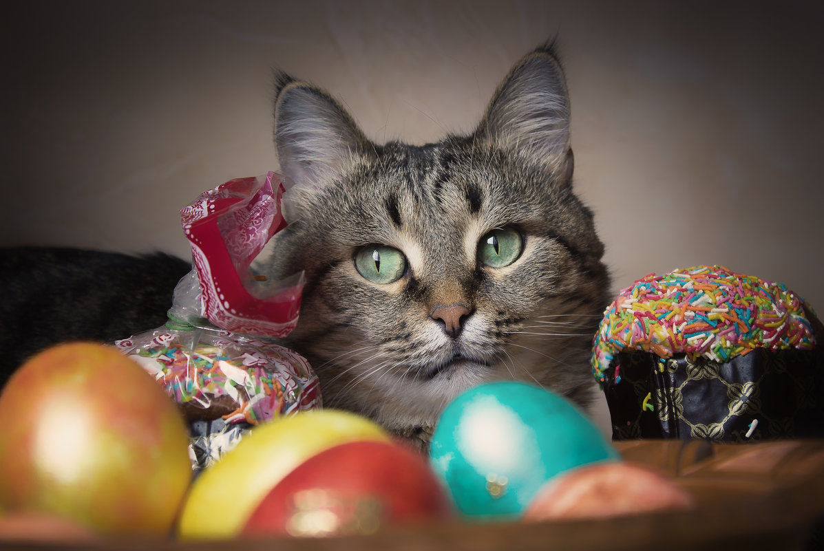 пасхальный кот - Александр