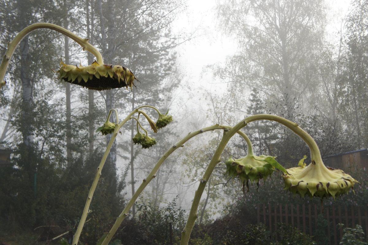 туман - Надежда