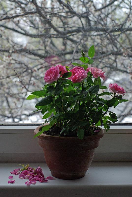 А за вікном йде сніг And outside the window it's snowing А за окном идет снег - Игорь Шубовичь