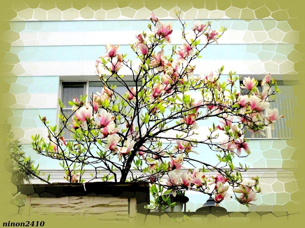 Цветение магнолии - Нина Бутко
