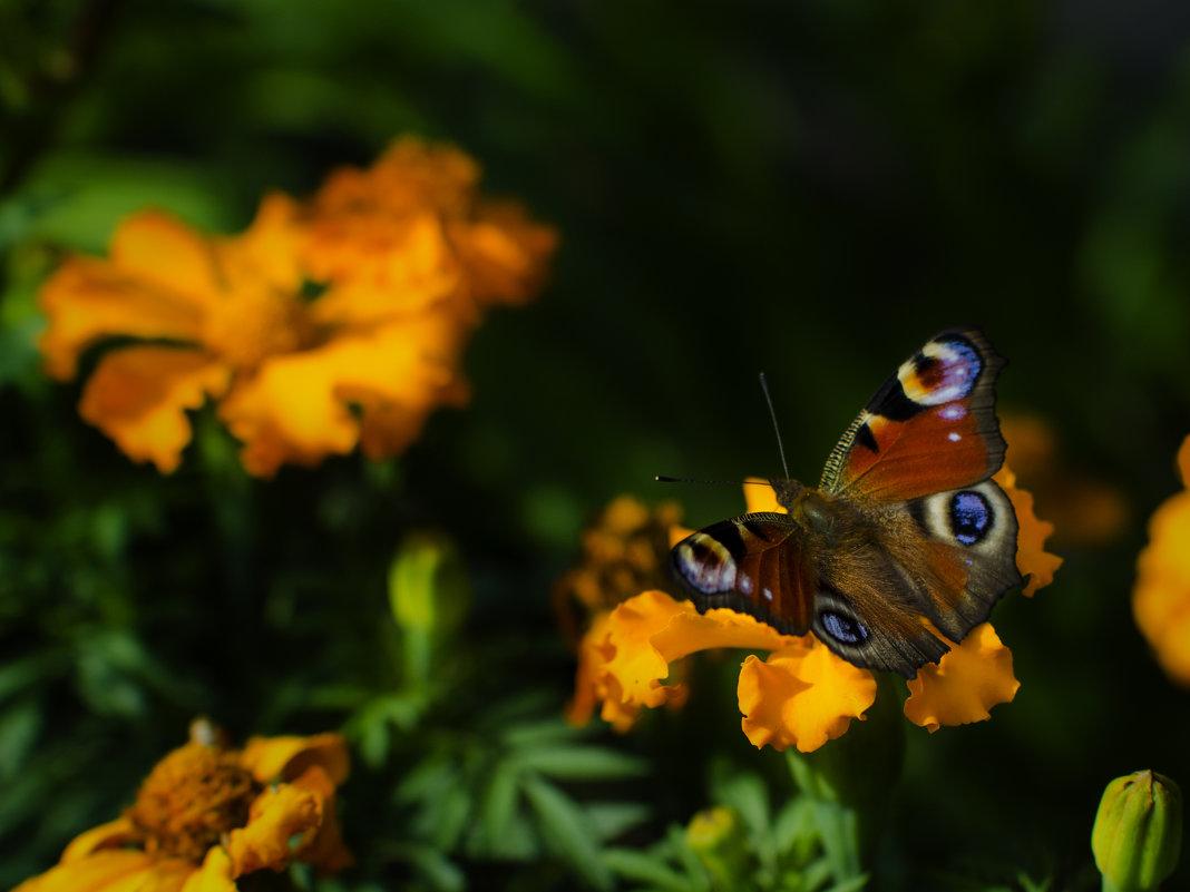 Просто бабочка - A_Performance ...