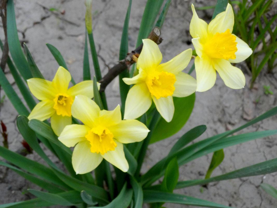 Приметы апреля... - Тамара (st.tamara)