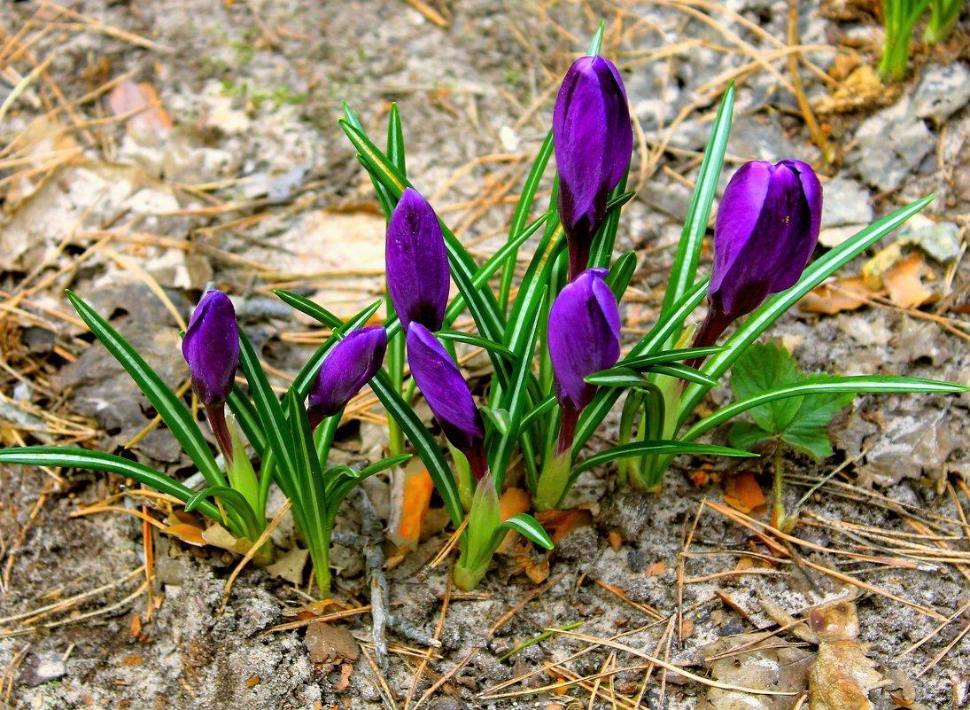 Здравствуй весна - Игорь Баринов