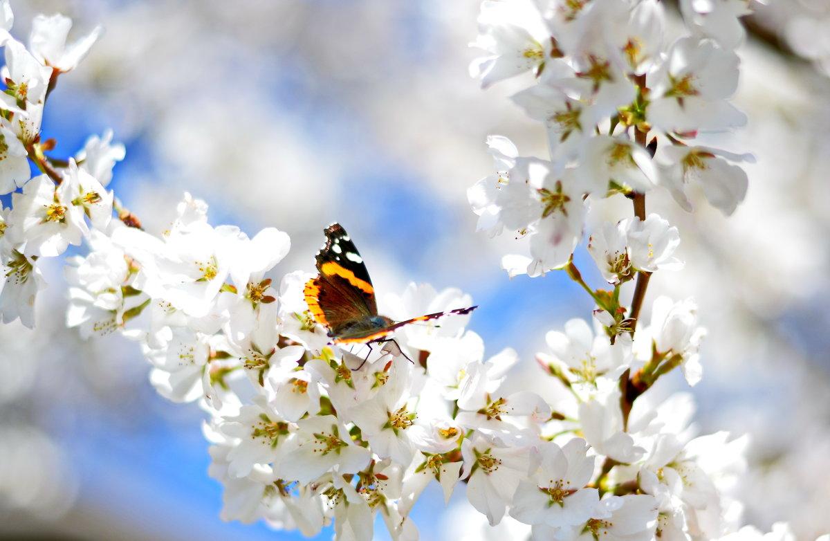Весна в Шампейне. - Марина Романова