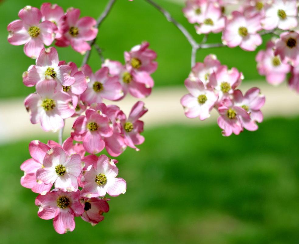 Весна в ярком цвете - Марина Романова