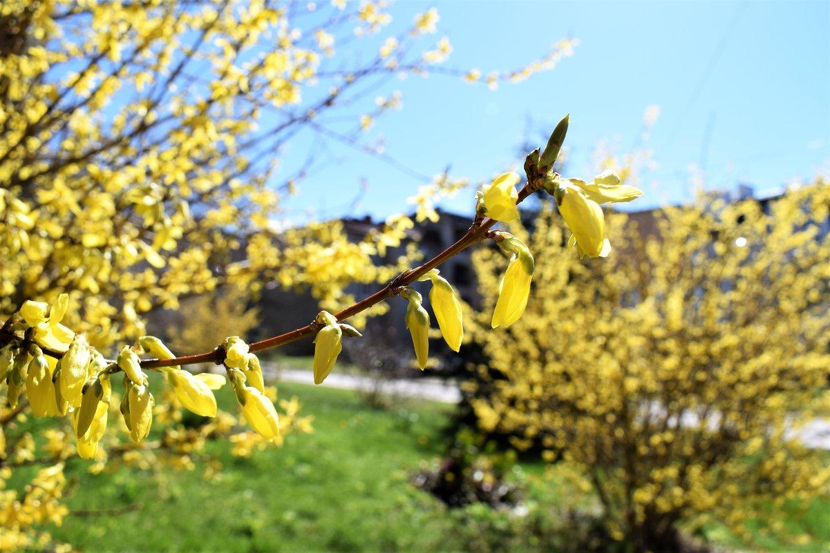 В городе весна - Марина