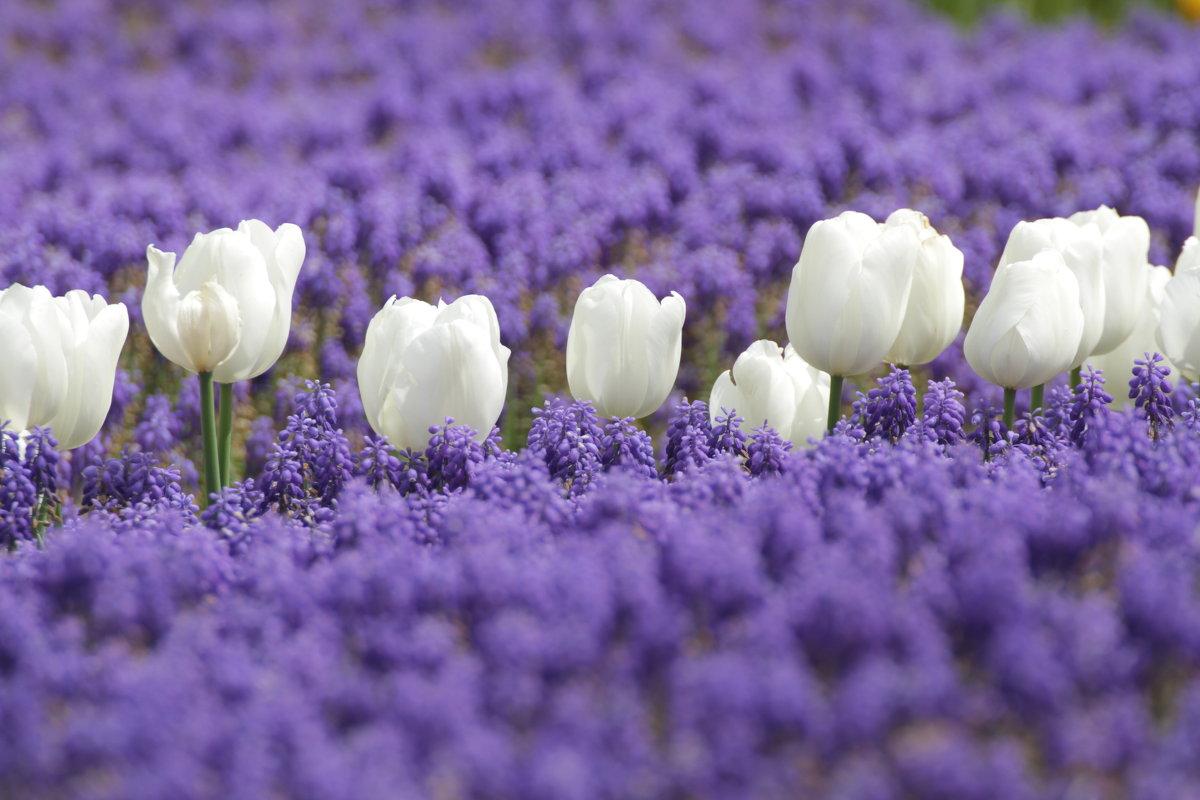 Цветы в парке - Александр Шевченко