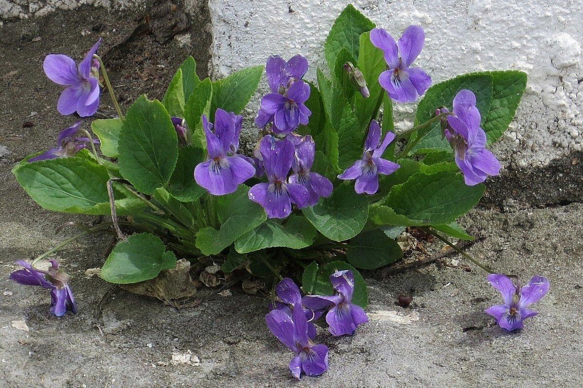 Весна в городе - Natali