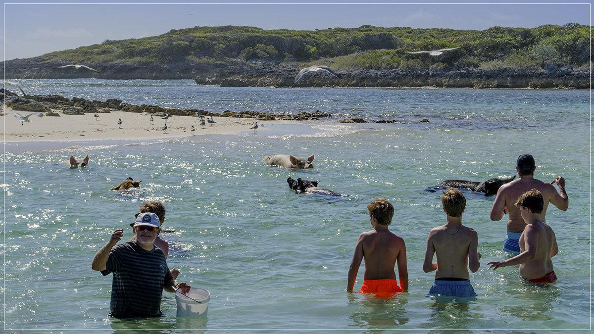 плавающие свиньи - Petr @+