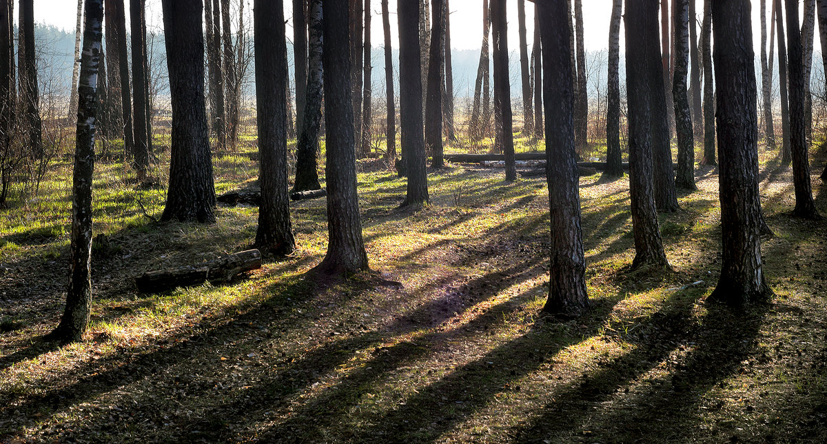 Лесной рассвет...5 - Андрей Войцехов