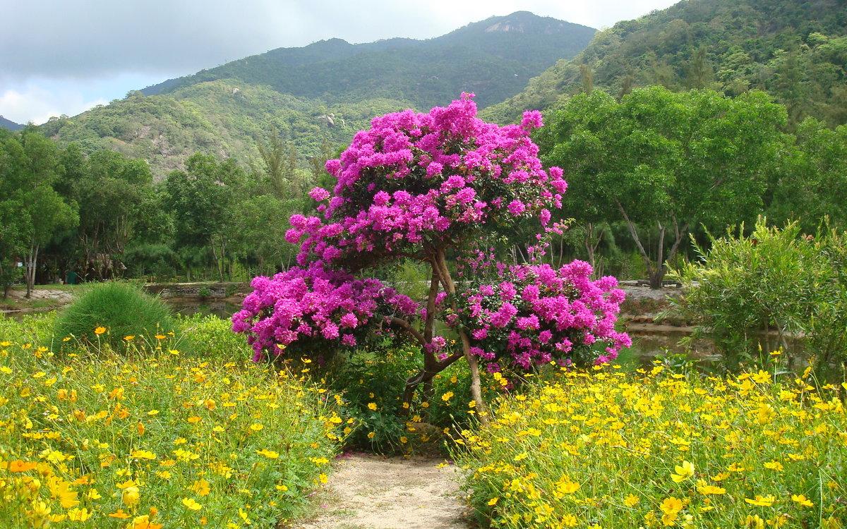 цветы Вьетнама - youry
