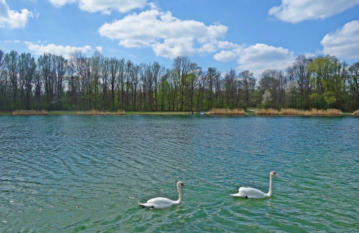 Лебеди на озере - Galina Dzubina