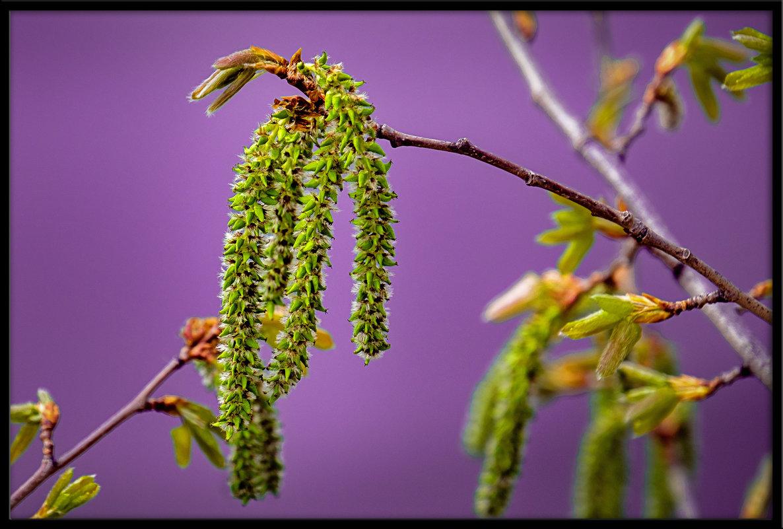 Весна - Марк Э