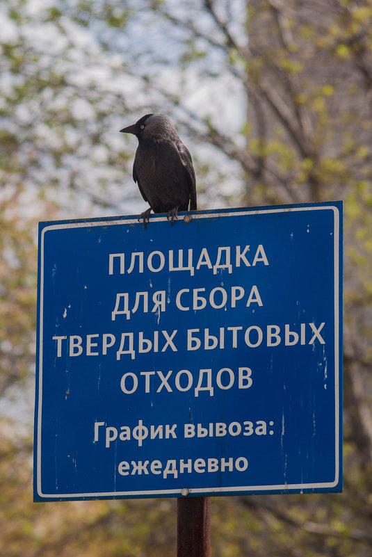 Смотрящий - Дмитрий Костоусов
