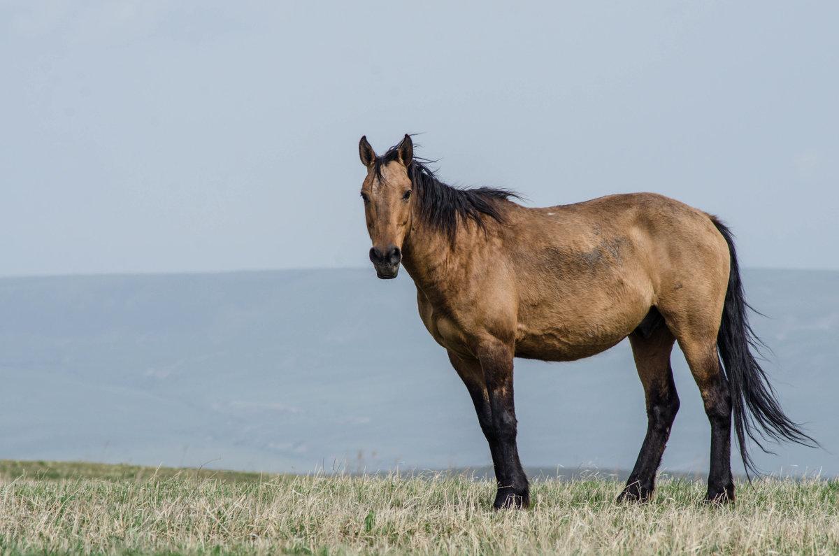 Дикая лошадь - Иван Коваленко