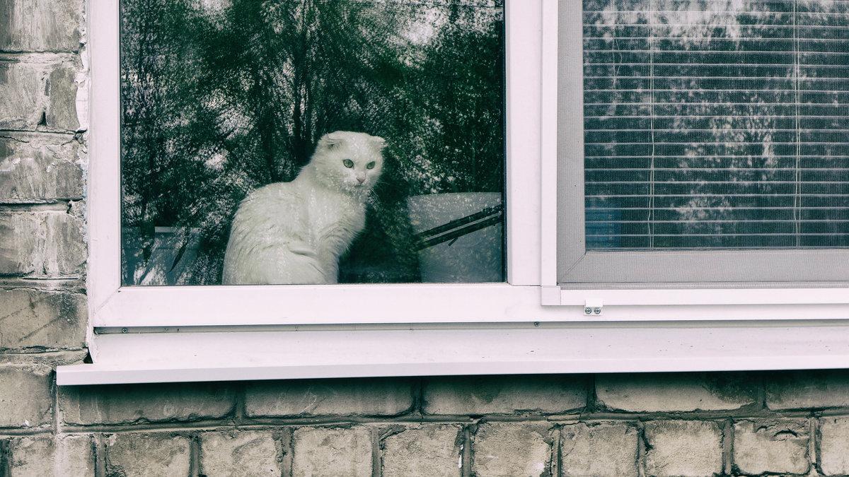 кошка в окошке - Саша Милашкин