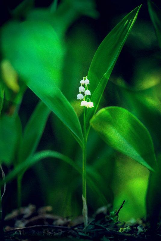 чудеса природы... - Александр Александр