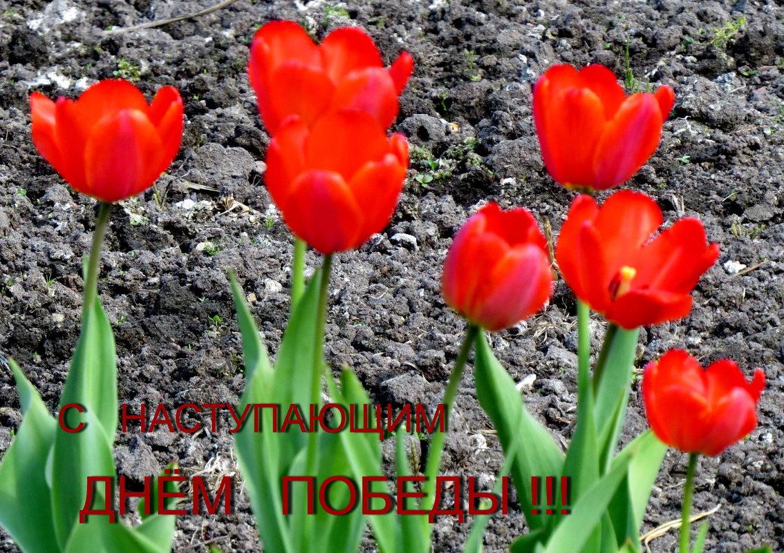 Только бы над миром небо было ясное  и на земле росли цветы - Светлана