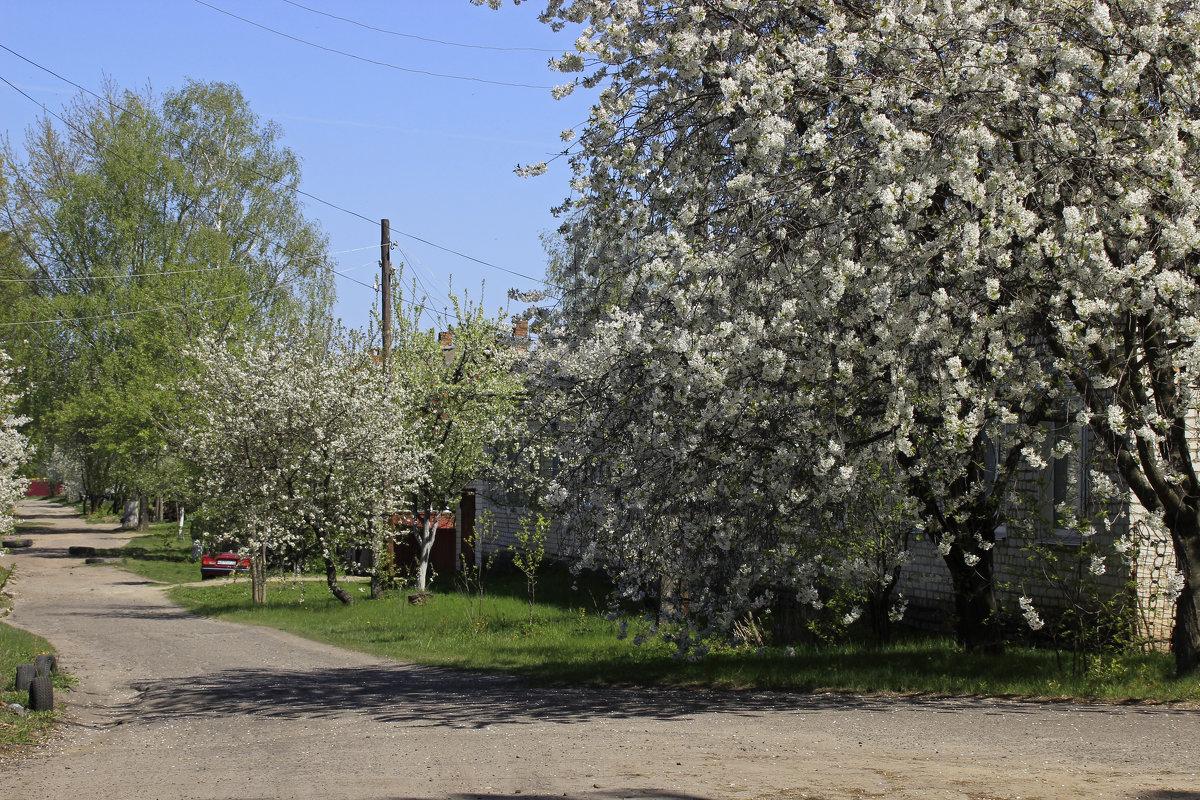 цветущая улица - оксана