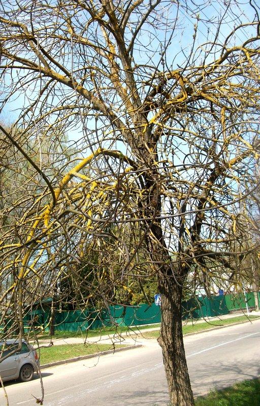 Цветное дерево - Галина Бобкина