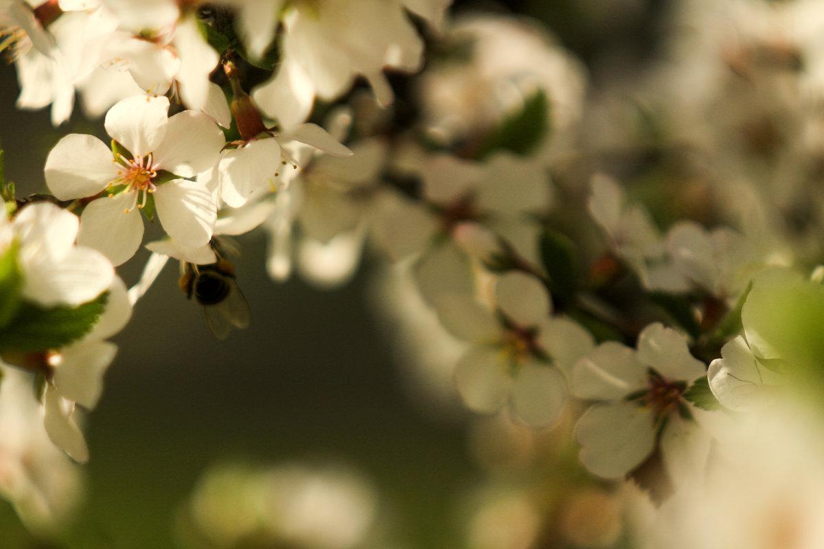 Весна! - Лилия Гиндулина
