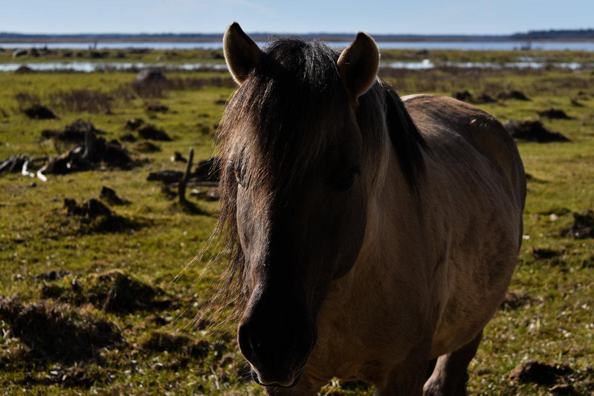 Дикий конь - Anna
