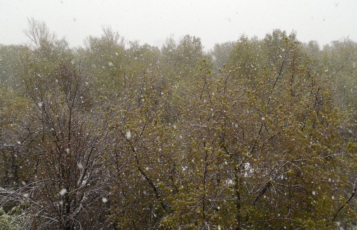 Майский снегопад - Мила