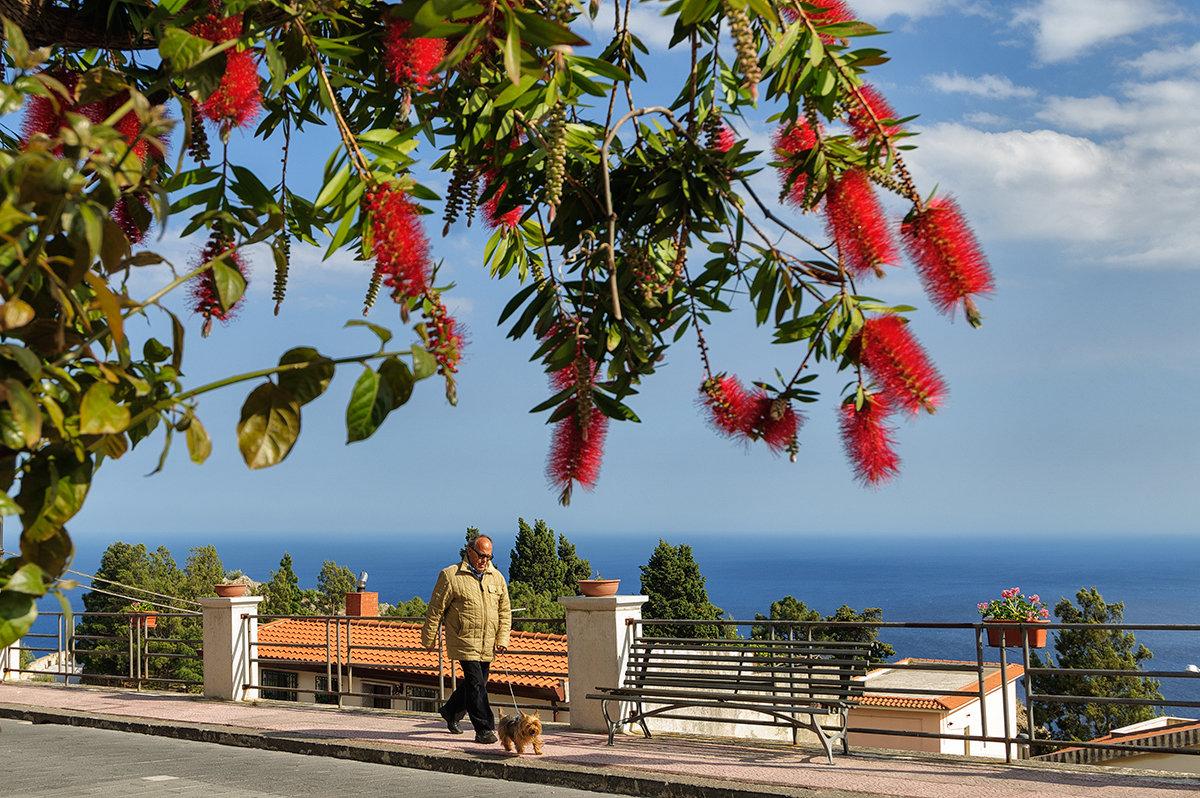 Цветущая Сицилия. На прогулке - Galina