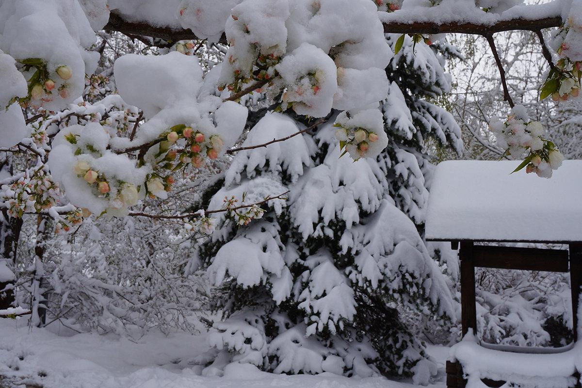 Снежный плен - Екатерина Торганская