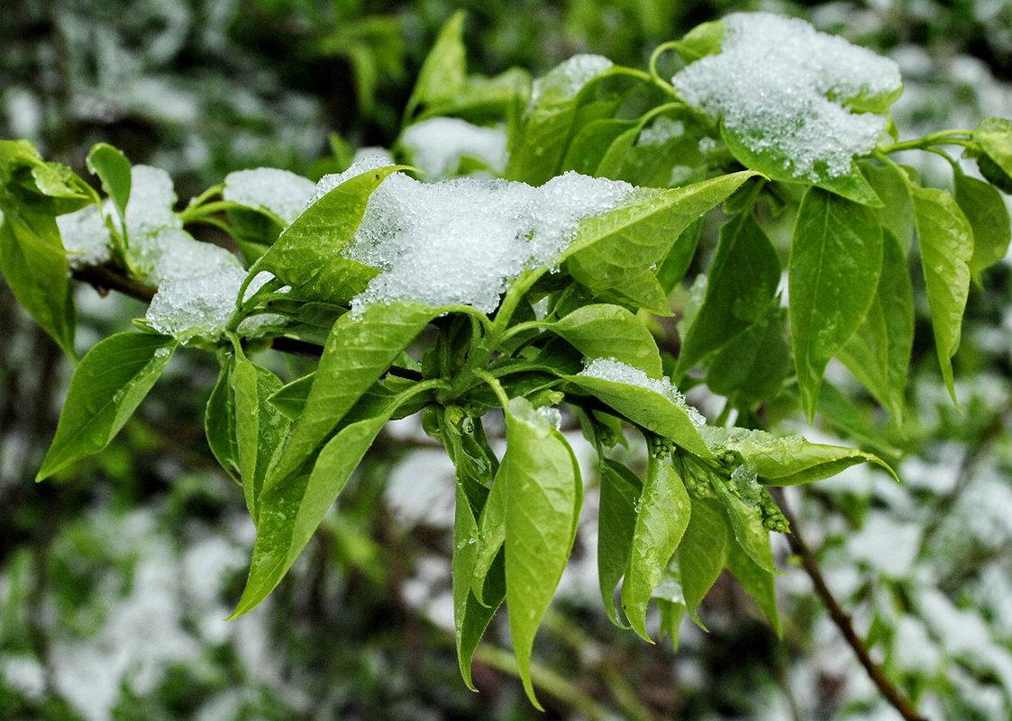 последний снег - Владислав Карпович