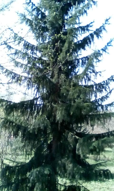 природа - Иван