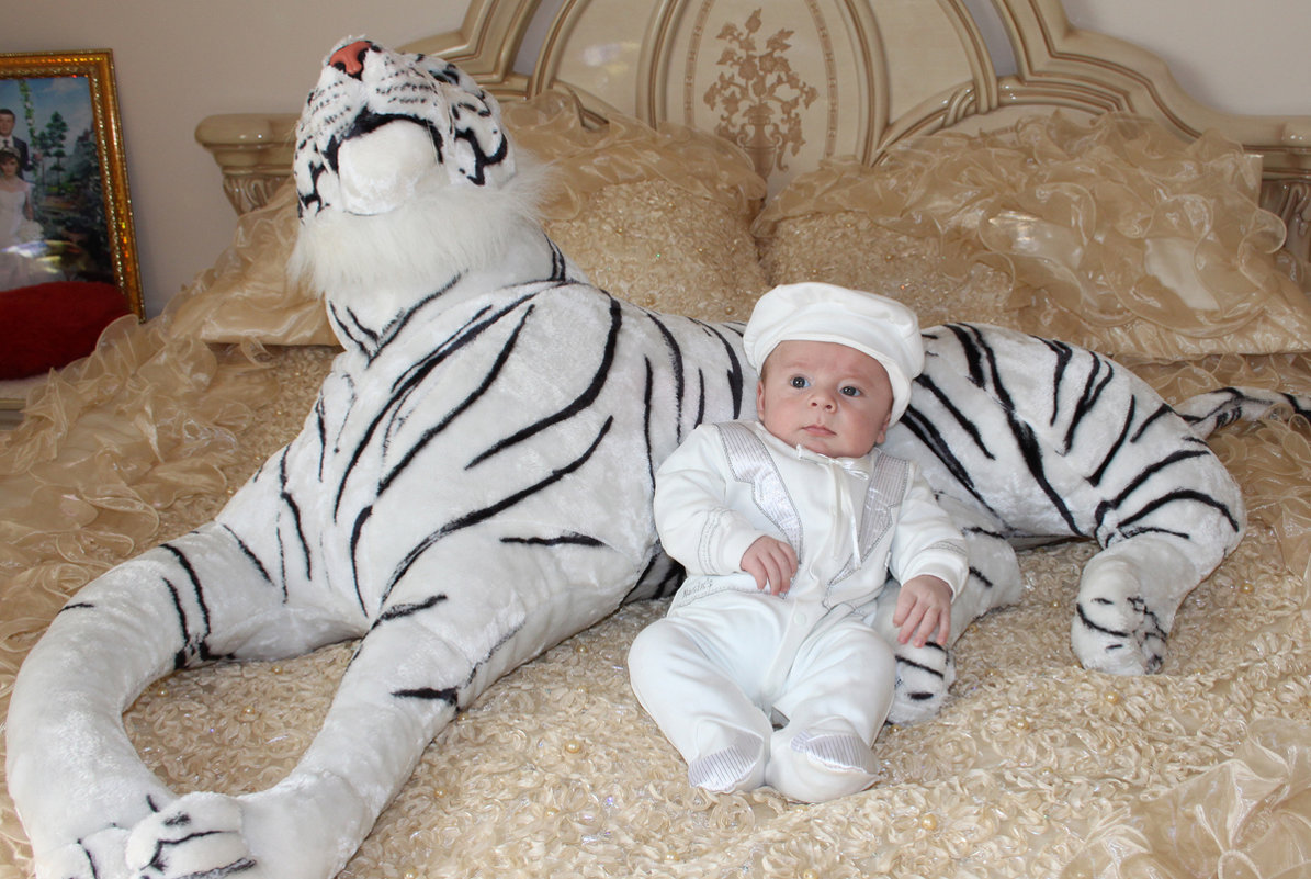 Мой собственный белый тигр - Михаил Костоломов