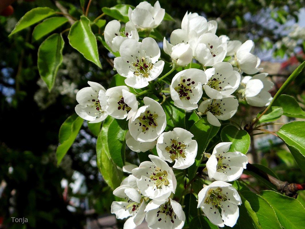 Многообещающее цветение.. - Антонина Гугаева