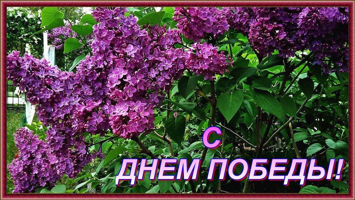 с Победой! - Александр Корчемный