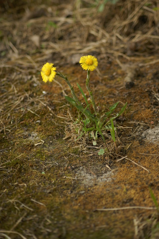 Цветы на камне - Светлана Т