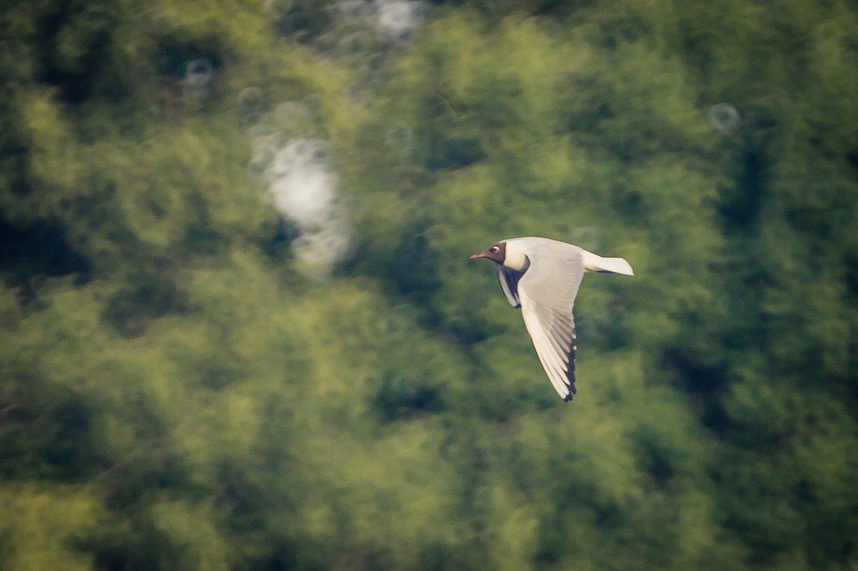 Птица - Ruslan --