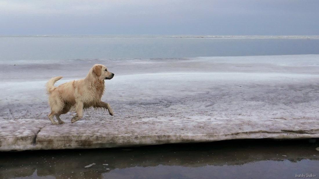 Собачье счастье - Анатолий Шулков