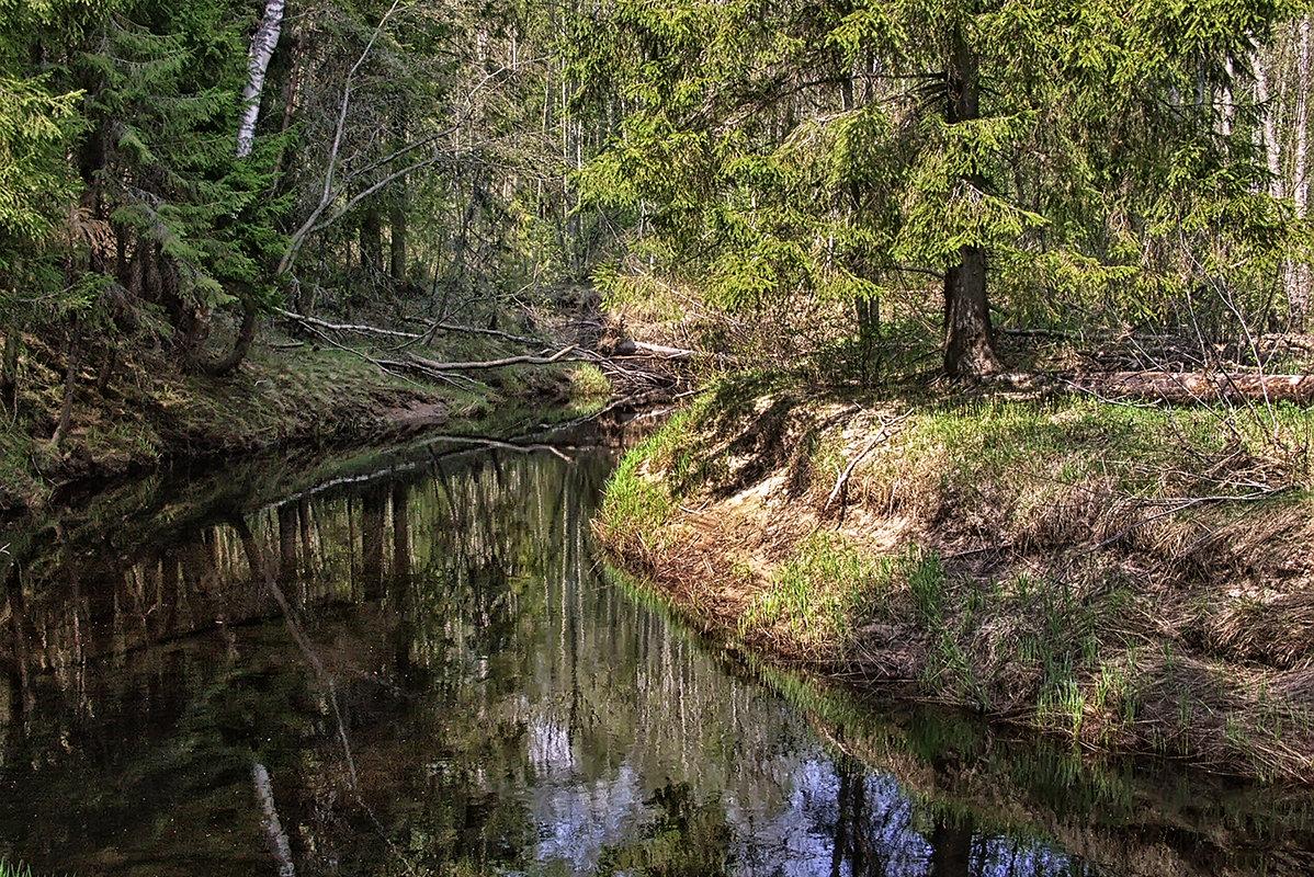весенний лес... - Владимир Матва