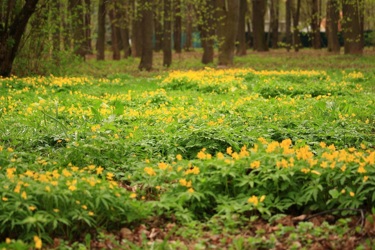В майском парке - Татьяна Ломтева