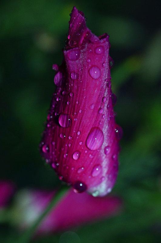 Ночной дождик - Татьяна Соловьева