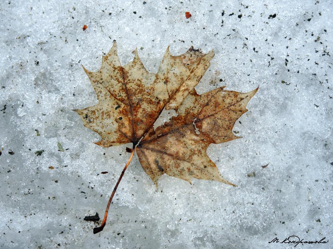 Зимний гербарий - Мария Кондрашова