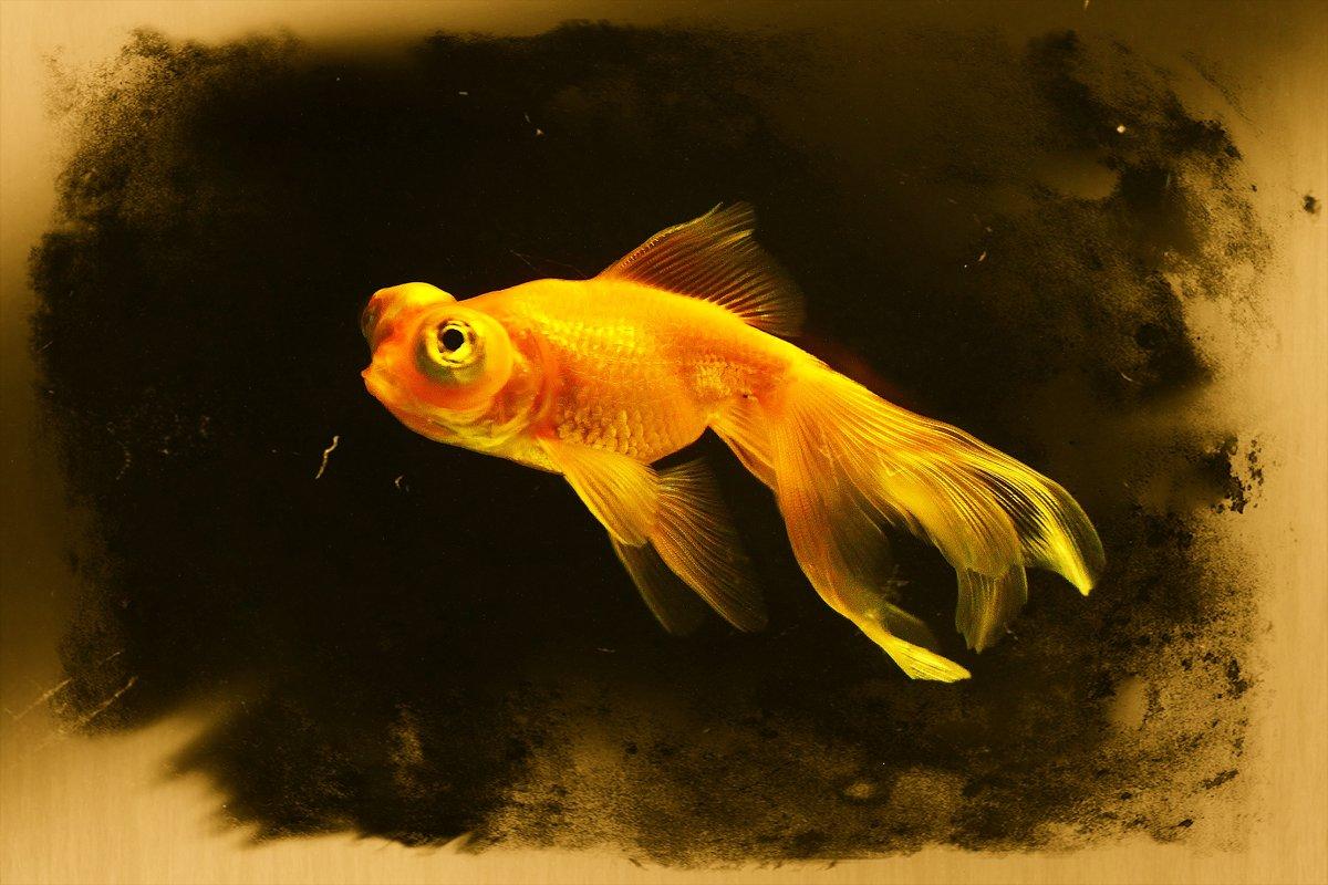 Златая рыбка,,,глазки строитЪ мне,,, - Юный Пионер Одиннадцатый