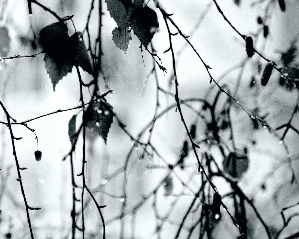 Акварельная  холодная  весна... - Валерия  Полещикова