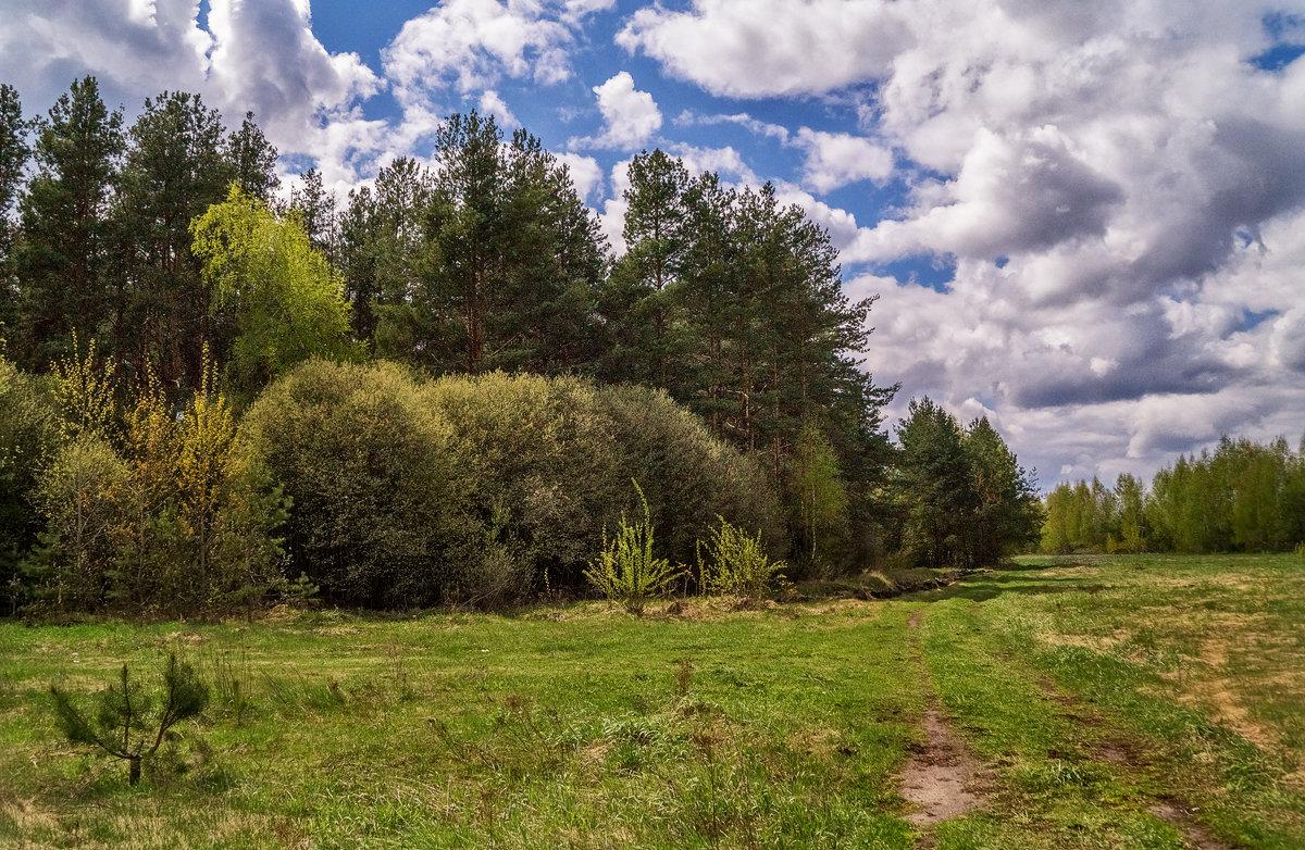 Майский пейзаж - Андрей Дворников