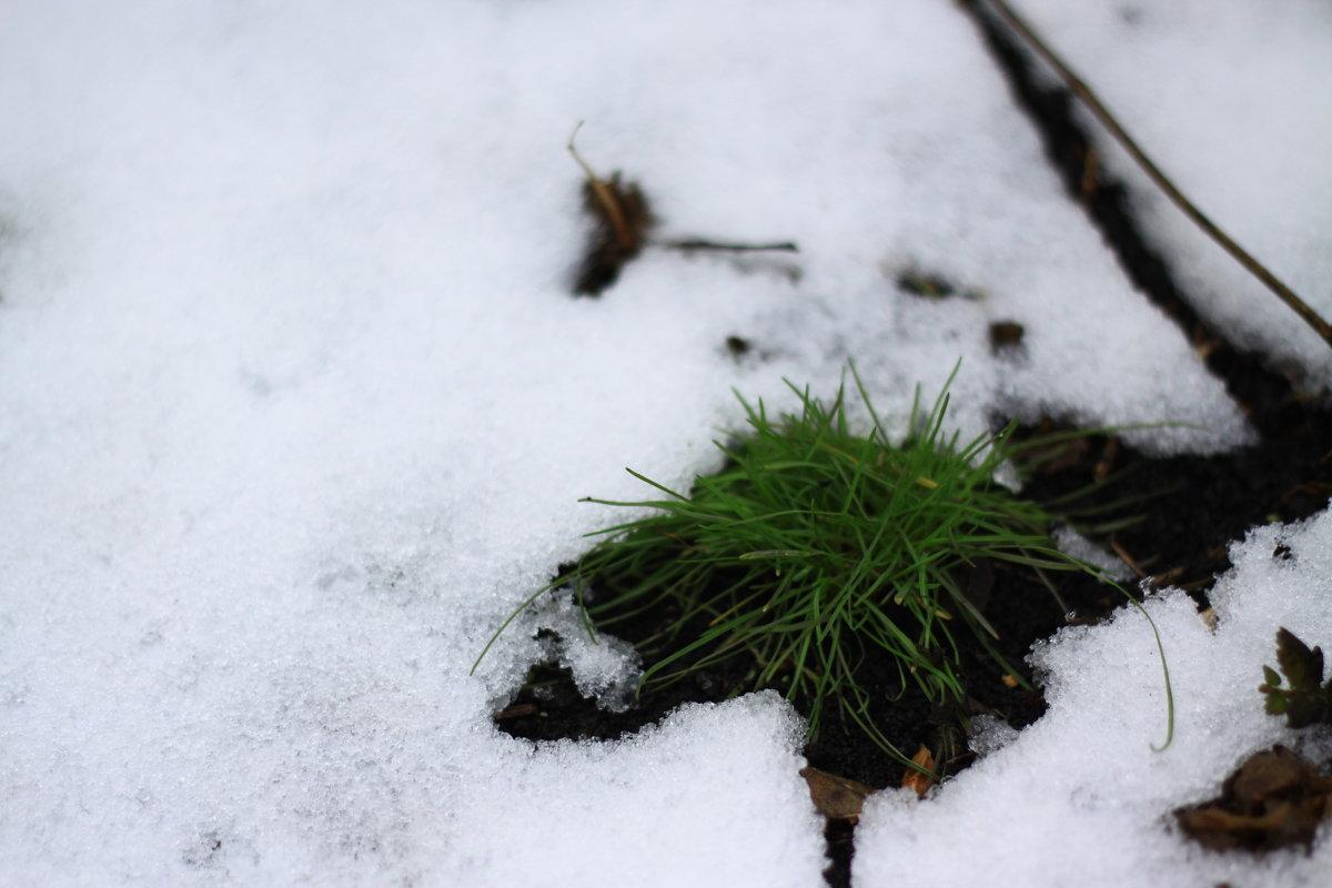 Весна идет - Евгений