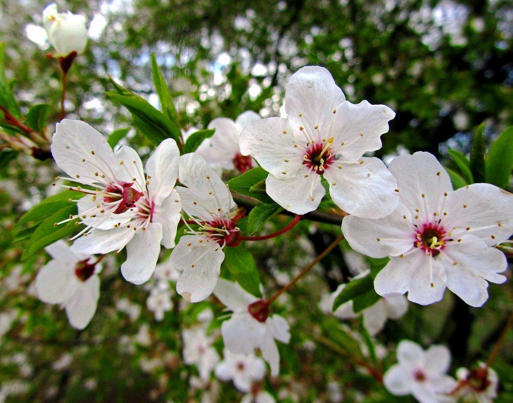 Цветут сады - Сергей Карачин