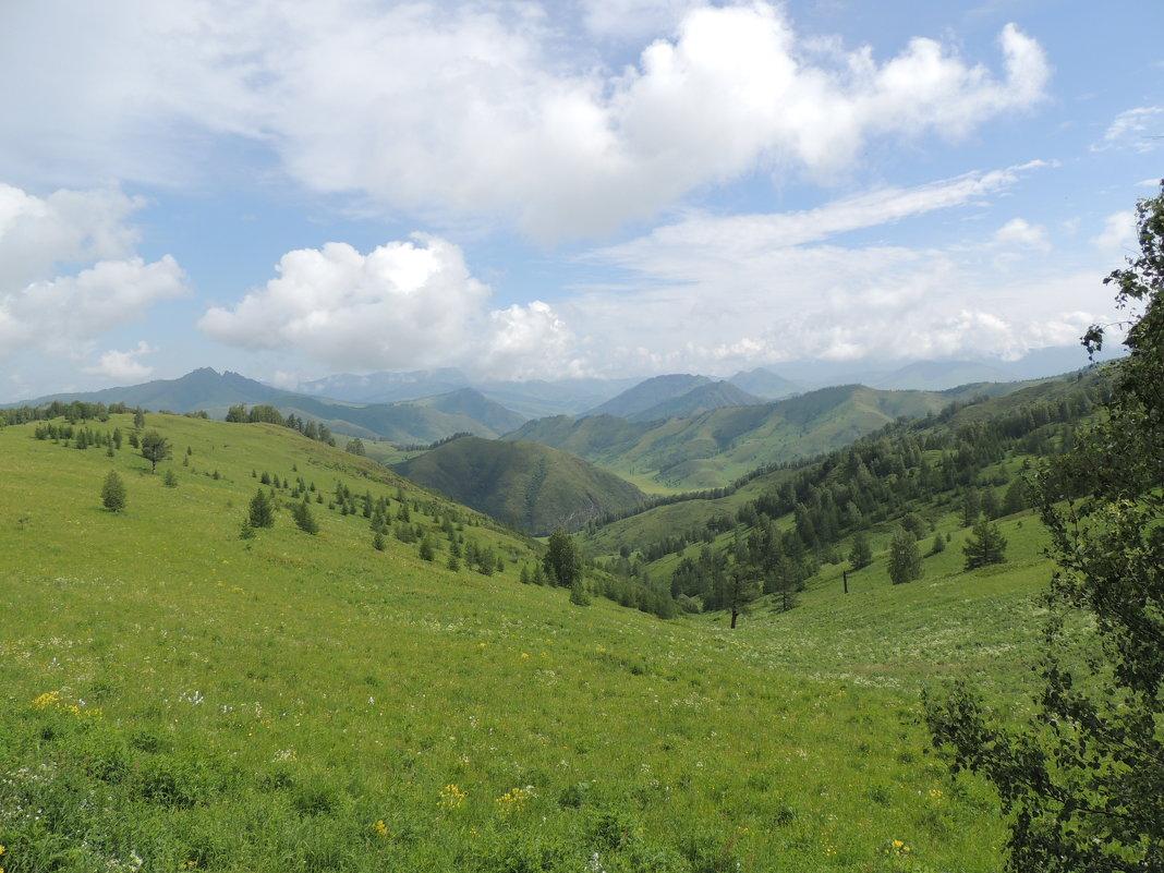 Сентелек - kaban-4eg Алтайский