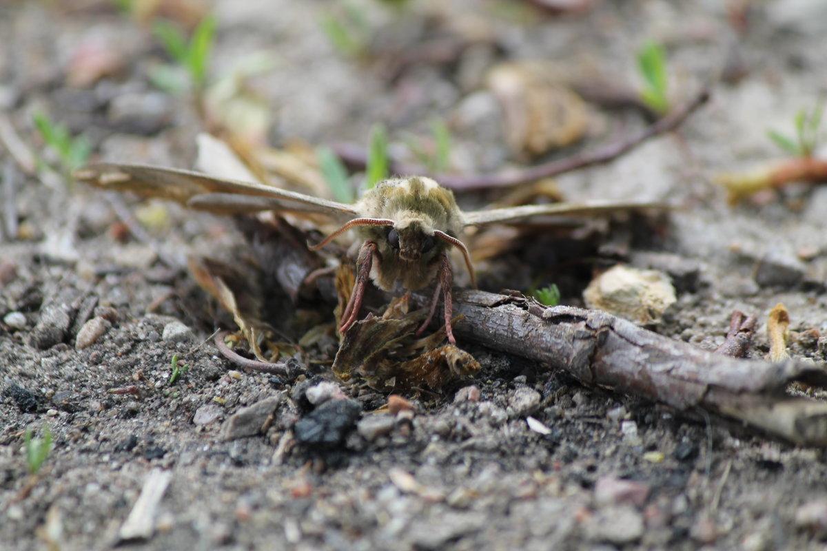 Ночная бабочка в солнечный день - Александра Романова