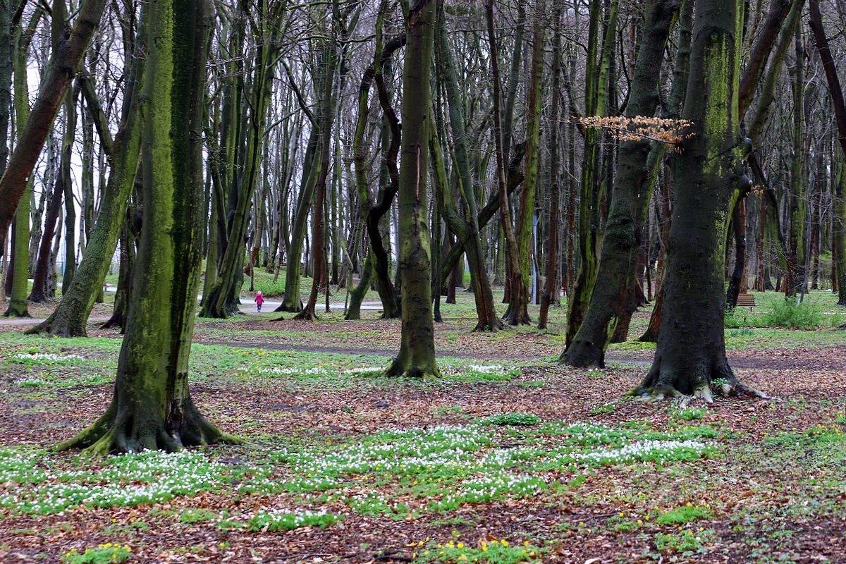Когда деревья были большими… - Юрий. Шмаков