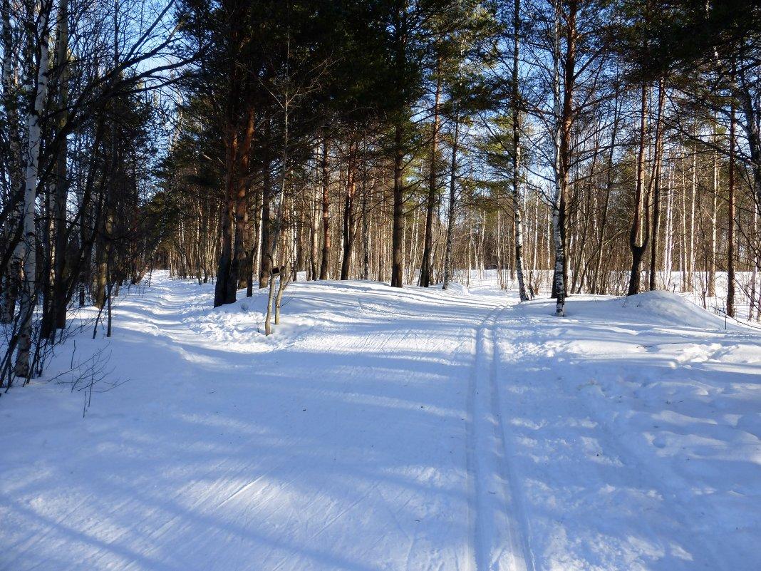 на лыжах в лесу - Елена Кордумова